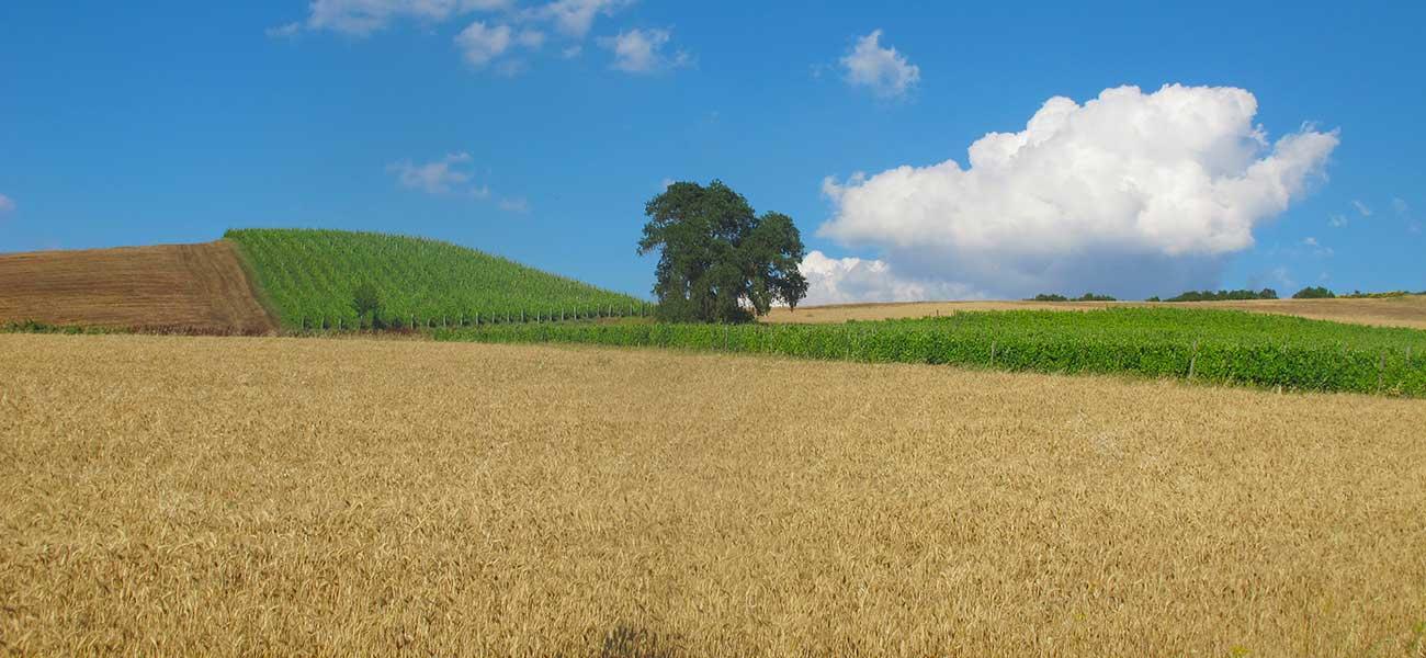 Il Tufiello, vini naturali in alta Irpinia